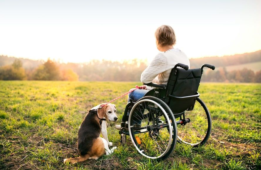 woman on wheelchair with dog - Cloud of Goods